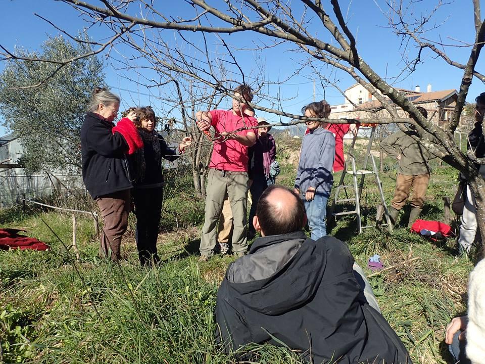Photo de la Formation Les Dimanches de l'Arbre - Session du 21 février 2016 - Taille des Arbres Fruitiers - Agroécologie