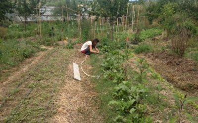 Stage Jardin Vivrier Agroécologique le 28 août
