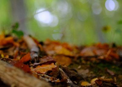 Litière forestière fermentée