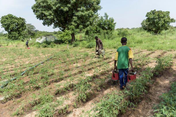 L'agroécologie paysanne : note de Coordination Sud