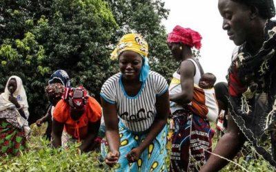 14 ans de formation d'animateurs endogènes en agroécologique en Afrique de l'ouest