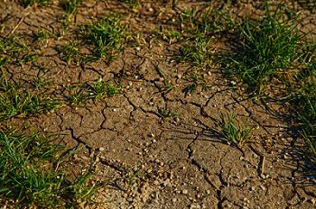 La sécurité alimentaire est menacée par la dégradation des sols
